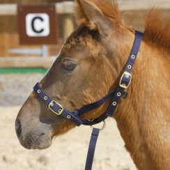 Shires Nylon Foal Slip