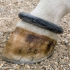 Shires Fetlock Ring