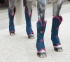 Shires Travel Boots - Set of 4