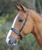 Shires Blenheim Hunter Noseband