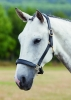 Shires Blenheim Leather Travel Headcollar (RRP £43.99)