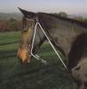 Shires Aviemore De Gouge Training Martingale