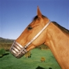 Shires Leather Bar Muzzle (Normally £24.99)