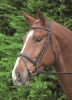 Shires Aviemore Comfort Fit Bridle