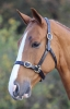 Shires Blenheim Leather Headcollar (RRP £38.99) PONY
