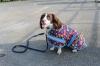 Weatherbeeta Parka Dog Rug