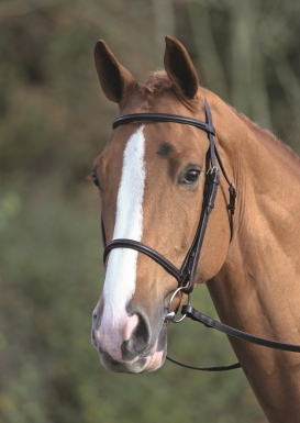 Shires Aviemore Raised Cavesson Bridle