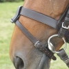 Shires Blenheim Flash Noseband Attatchment