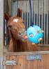 Horse Treats & Toys